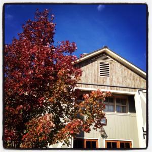 Pippin Hill Vineyard, October 2013.